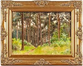 pine-trees-on-blackdown